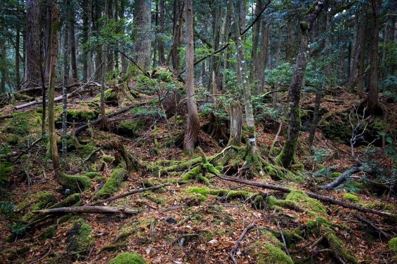 El bosque de Aokigahara es uno de los lugares para visitar en Halloween