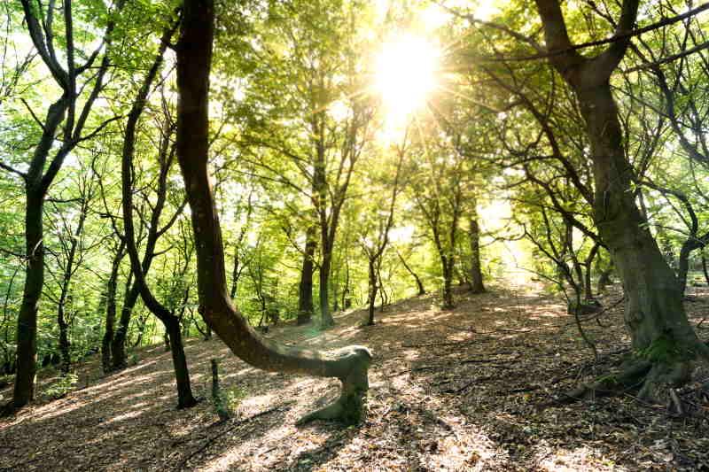 El bosque Hoia Baciu en Cluj-Napoca