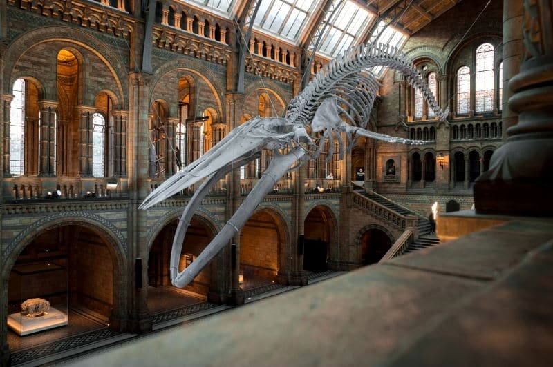 El Museo de Historia Natural en Londres es uno de los mejores museos que visitar en Londres