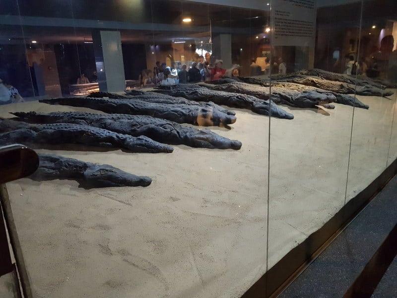 Museo del Cocodrilo y los cocodrilos momificados que ver en Aswan