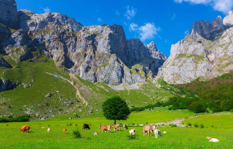Alquila casas rurales baratas en Asturias