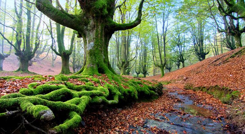 Adéntrate en el Parque Natural de Gorbeia